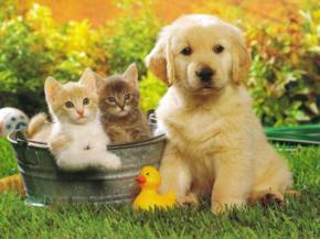 Perchè preferiamo i cani aigatti?